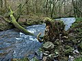 Fallen tree, River Bovey - geograph.org.uk - 1085021.jpg