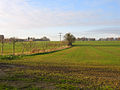 Farmland, Dry Drayton, Cambs - geograph.org.uk - 89346.jpg