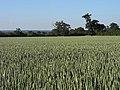 Farmland, Hawthorn Hill - geograph.org.uk - 1556162.jpg