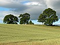 Farmland, Milton of Machany - geograph.org.uk - 200347.jpg
