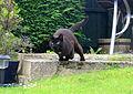Fast cat (7168745319).jpg