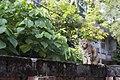 Felis silvestris catus (36381184593).jpg