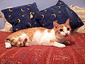 Felix cat.jpg