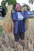 Female harvester laughing while carrying two heavy sheaves of rice in Laos.jpg