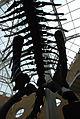 Fernbank Museum - Atlanta - Flickr - hyku (14).jpg