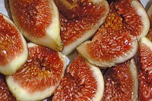 Common fig - Wikipedia