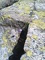 Fiori al Monte Rosa.jpg