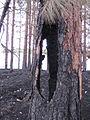 Fire Tree (7157555047).jpg