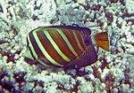 Fish 14 (30908958221).jpg