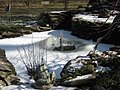 Fishpond in winter (386698776).jpg