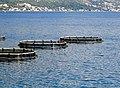 Fishponds in Bay of Kotor.jpg