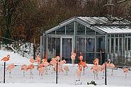 Flamingoanlage im Winter Zoo KA DSC 6754