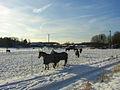 Flickr - Per Ola Wiberg ~ mostly away - Ekebyhov ~ horses.jpg