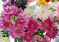 Flickr - ronsaunders47 - RON'S BLOOMS 2..jpg