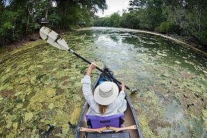 Tom Rooney (Florida politician) - A Florida kayaker's paddles scoop up algae on the Santa Fe River, 2012