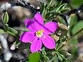 Flower (11656529).jpg
