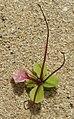 Flower Stalk (4265200111).jpg