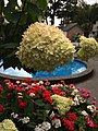 Flower at Portmeirion.jpg