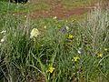 Flowers at Juniper Point - Flickr - brewbooks.jpg