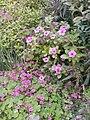 Flowers of Baghdad 22.jpg