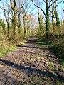 Footpath, Tottington Wood - geograph.org.uk - 757070.jpg