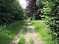 Footpath in Crichel Park - geograph.org.uk - 466323.jpg