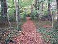 Footpath through the woods near Adlestrop - geograph.org.uk - 1552272.jpg