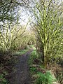 Footpath to The Drove - geograph.org.uk - 1174264.jpg
