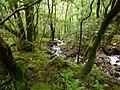 Forest in Glen Nevis - panoramio.jpg