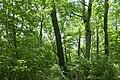 Forest in Mt.Nandai 03.jpg