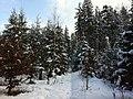 Forest of Schlosshubel between Niederbuchsiten and Wolfwil - panoramio.jpg