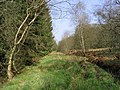 Forest walk - geograph.org.uk - 410066.jpg
