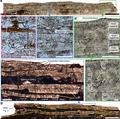 Fossil-AvimaiaSchweitzerae-EggShell.png