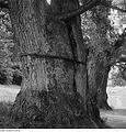 Fotothek df ps 0004758 Gärten - Parks ^ Schloßgärten - Palaisgärten.jpg