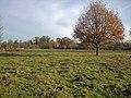 Fulbourn Fen Nature Reserve - geograph.org.uk - 1046519.jpg