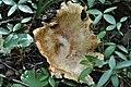 Fungus (6).jpg