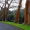 Furnas, S. Miguel, Açores,Portugal - panoramio (14).jpg
