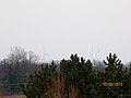 Galactic Wind Farm - panoramio (16).jpg