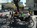 Garden District Easter Parade carriage 2008.jpg