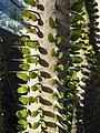 Gardenology.org-IMG 2731 ucla09.jpg
