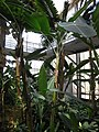 Gardenology.org-IMG 7549 qsbg11mar.jpg