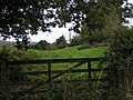 Gate and field at Clapham - geograph.org.uk - 1565570.jpg