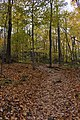 Gatineau Park, October 2018 (10) (44417690895).jpg