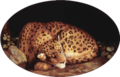 George Stubbs - Leopard.png