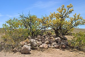 Cochise County in the Old West - A pile of stones in Skeleton Canyon marking the site of Geronimo's surrender in 1886