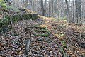 Gfp-iowa-bellevue-state-park-moss-covered-steps.jpg