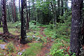 Gfp-minnesota-voyaguers-national-park-hiking-path.jpg
