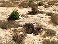 Ggantija, Gozo 95.jpg