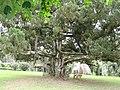 Ghana Aburi Botanical gardens (1).jpg