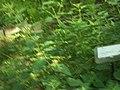 Giardino botanico di Brera (Milan) 326.jpg